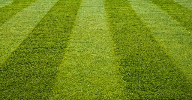 perfectly mowed lawn