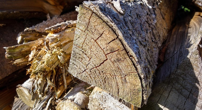 cracks in the log indicate drying